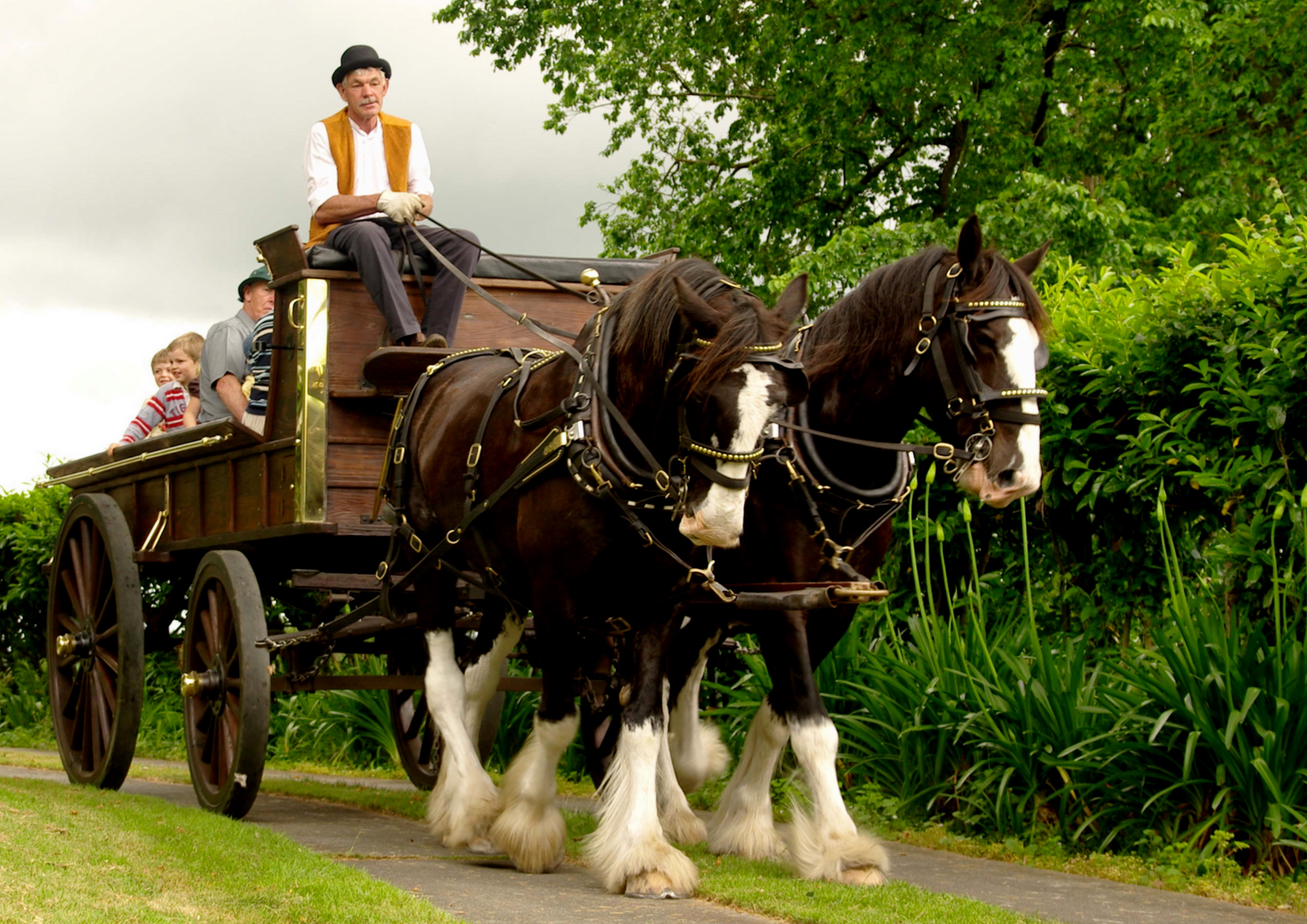 Clydesdale_wagon